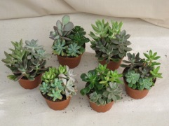 "4"" Succulent Gardens"